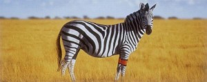 ref zebra